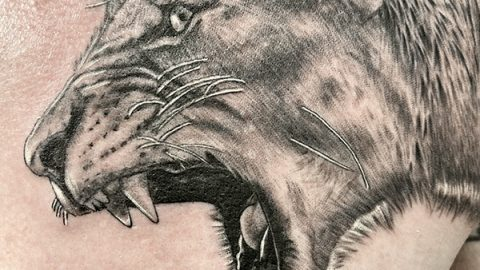 lioness-head-6